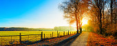 Landscape in autumn, road next to a pasture at sunrise