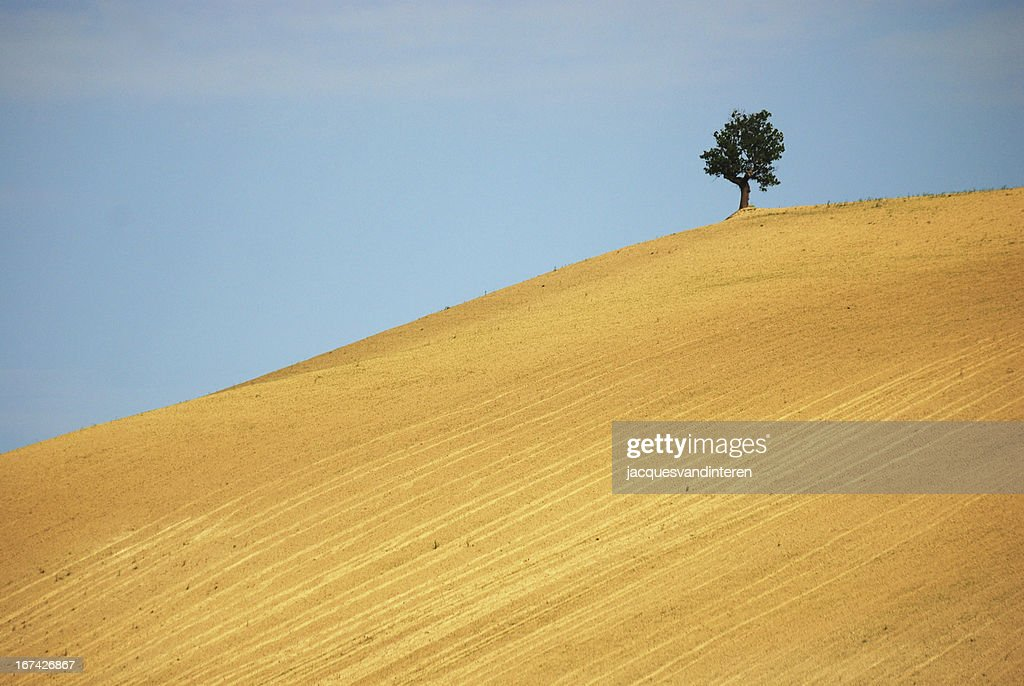 Landscape in Italy : Stock Photo