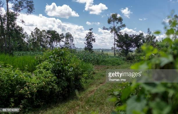 Landscape in Kakamega County on May 16 2017 in Kakamega County Kenya