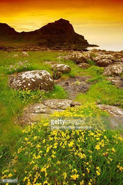 Landscape in Northern Ireland