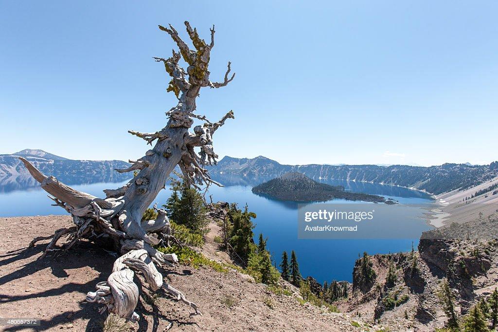 Landscape In Oregon : Stock Photo