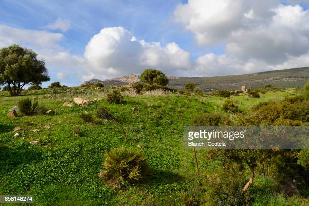 Landscape in roman ruins of Baelo Claudia
