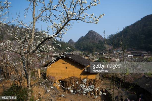 Landscape in spring in Ha Giang