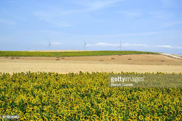 Landscape in the countryside in spring
