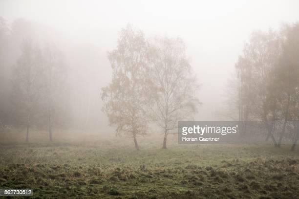 Landscape in the foggy morning near lake Grunewaldsee on October 18 2017 in Berlin Germany