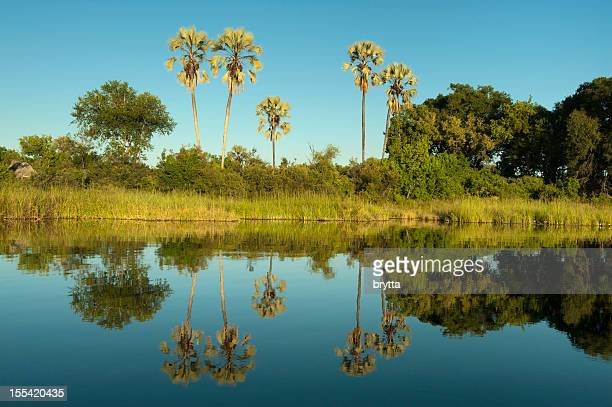 Landscape in the Okavango Delta