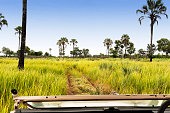 Beautiful landscape  with wetland, palm trees and grasses  seen from the safari vehicle, in the Xigera Concession in Botswana.