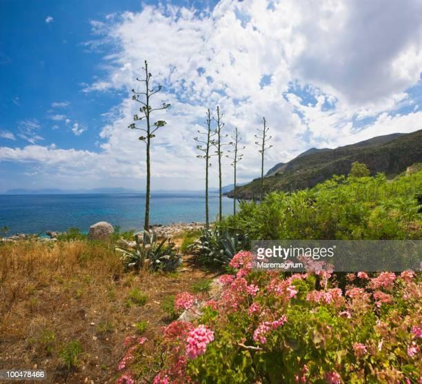 Landscape in Zingaro Natural Reserve