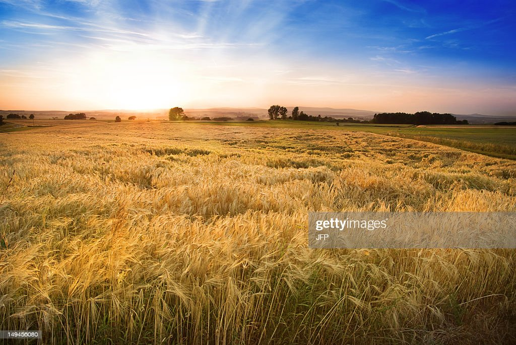 Landscape light at sunset : Stock Photo