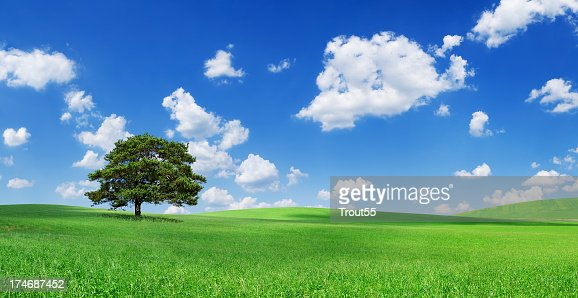 Landscape - Lonely tree on green field : Stock Photo