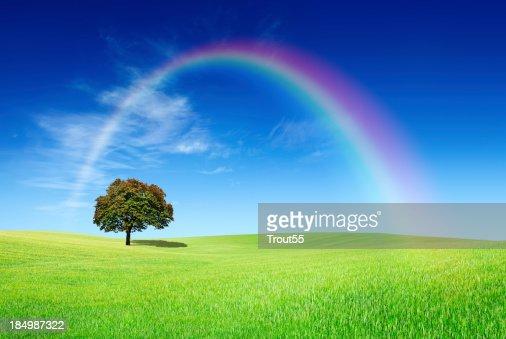 Landscape - Lonely tree on green field