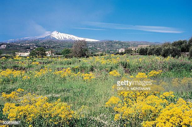 Landscape looking towards Etnea Zafferana with Mount Etna in the background Sicily Italy