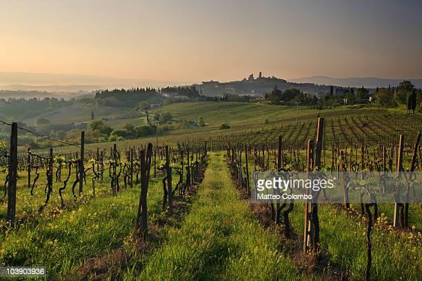 Landscape near San Gimignano