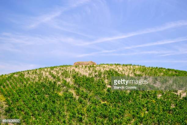 Landscape of a hill planted in spring
