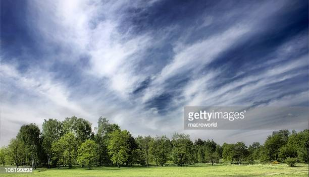 Landscape of a tree line under a cloudy sky