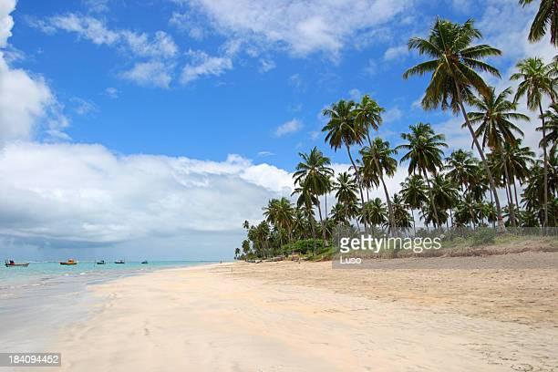 Landscape of a tropical beach in Brazil