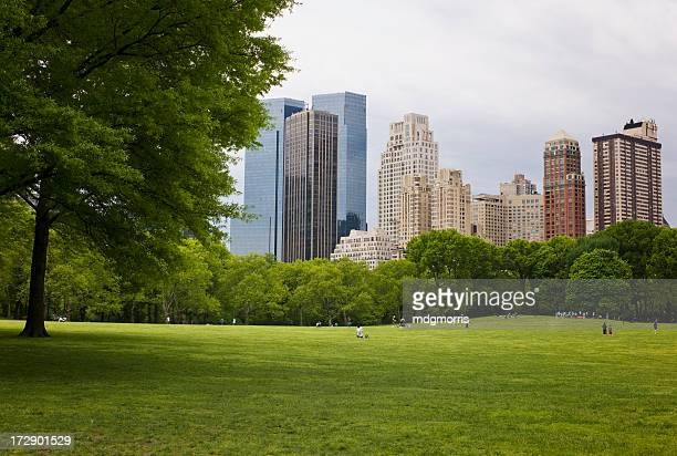 Landscape of Central Park with tall buildings in distance