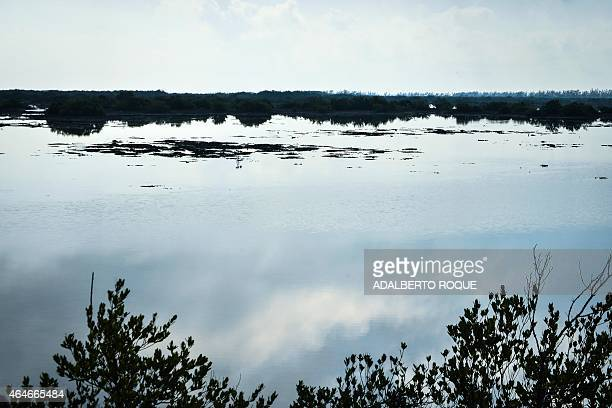 Landscape of Cienaga de Zapata Bay of Pigs Matanzas Cuba 200 km southeast of Havana on February 25 where Cubans and tourists from the US and Russia...