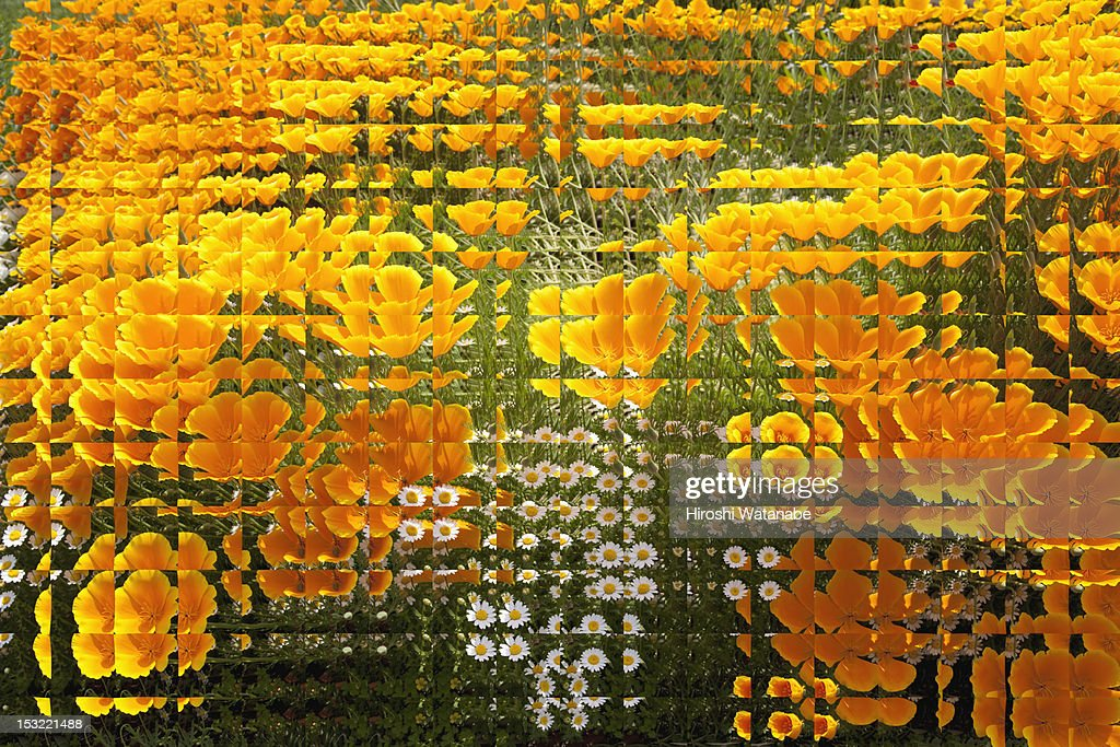 Landscape of discontinuous pattern : Stock Photo