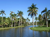 Beautiful lake and palm trees in Miami