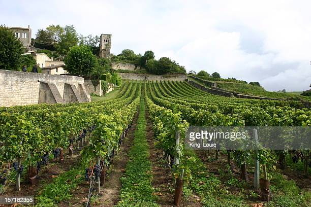 Landscape of French Vineyard