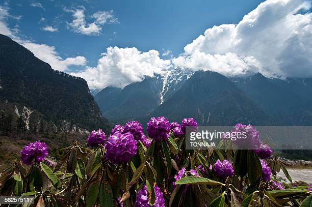 Landscape of Lachung area, North Sikkim, India