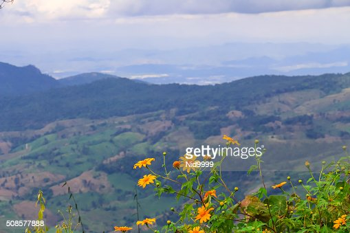 Landscape of Phu Ruea National Park in Thailand. : Stock Photo
