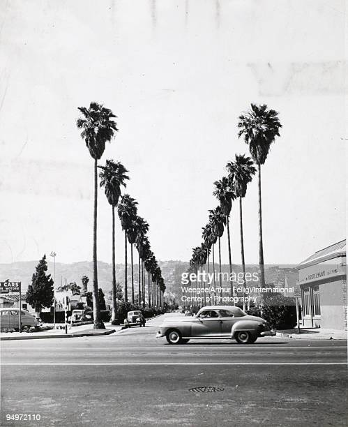Landscape of the corner of two streets one is lined with palm trees featuring cars houses and a restaurant Los Angeles CA 1950s Photo by...