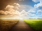 Landscape of wooden pathway with the changing environment. Concept of climate change.