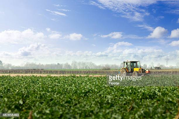 Landscape: Potato Field and Tractor