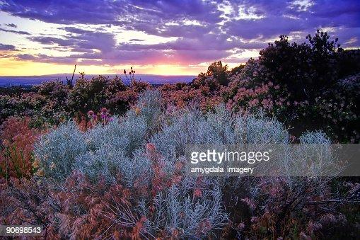 landscape sagebrush sunset sky desert