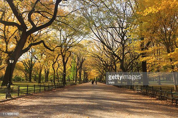 Landscape shot of Central Park in New York City in autumn