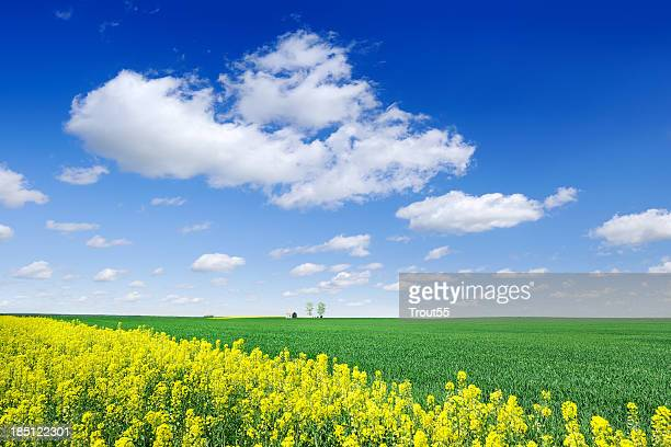 Landscape - Spring fields, the blue sky and white clouds