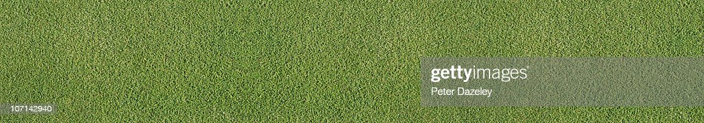 Landscape view of grass on golf green : Stock Photo