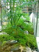 'Landscape view' - Wardian Case Terrarium