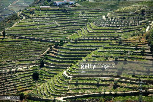 Landscape - Vineyards