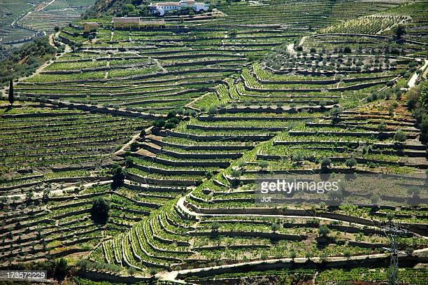 Landscape - Vineyards