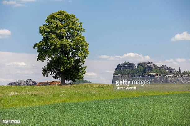 Landscape with a tree near the Schrammsteine rock group, Elbe Sandstone Mountains, Saxony, Germany, Europe