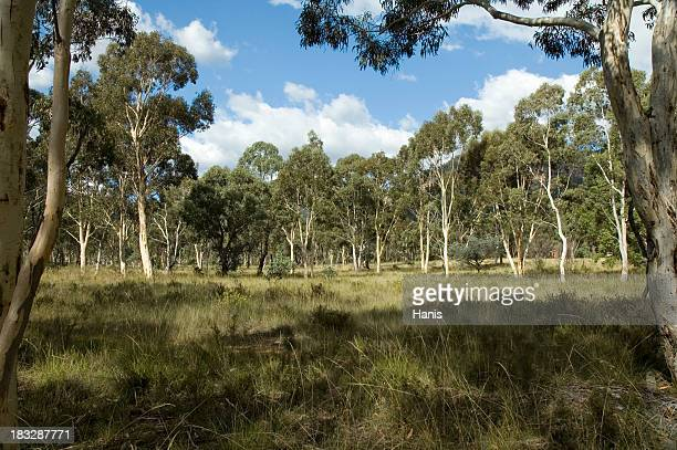 Landscape with grass and trees of the Australian countryside