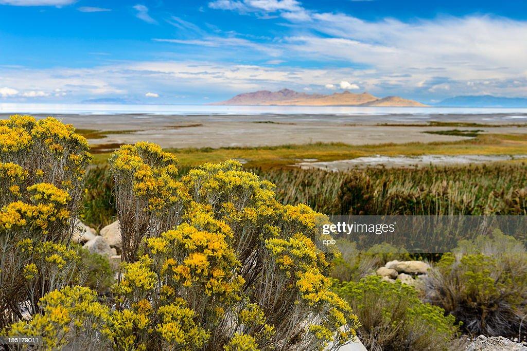 Landscape with Great Salt Lake