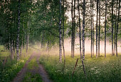 Landscape with idyllic road and fog at summer evening in Mäntyharju, Finland