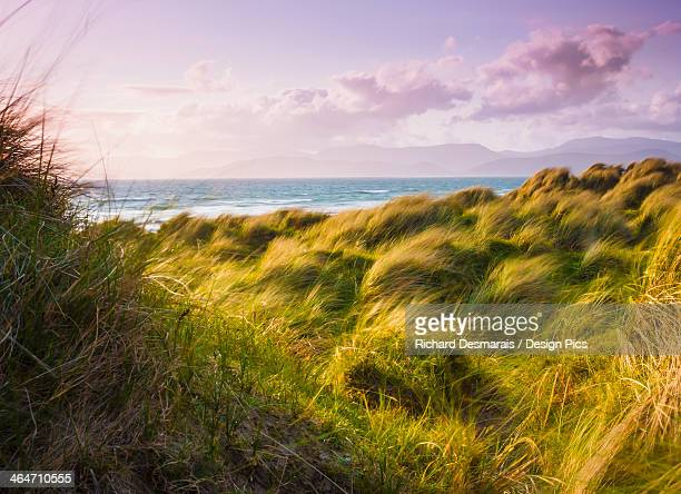 Landscape With Long Grass Blowing In The Wind At The Coast