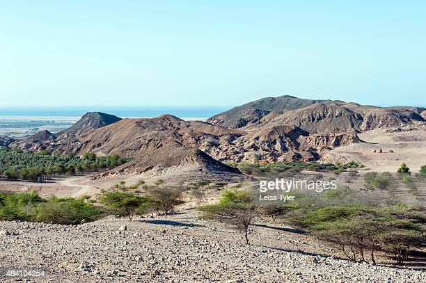Landscape with orchards on Sir Bani Yas an island in the Persian Gulf The once private retreat of the United Arab Emirates founder the former Sheikh...