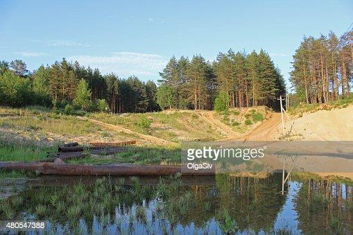Paisagem com Floresta de pinho : Foto de stock