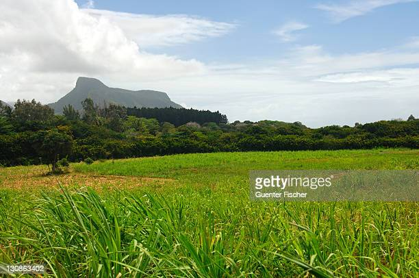 Landscape with sugar cane field, Mauritius