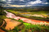 Landscape with the rice fields and Onive river at Antanifotsy in MadagascarLandscape with the rice fields and Onive river at Antanifotsy in Madagascar