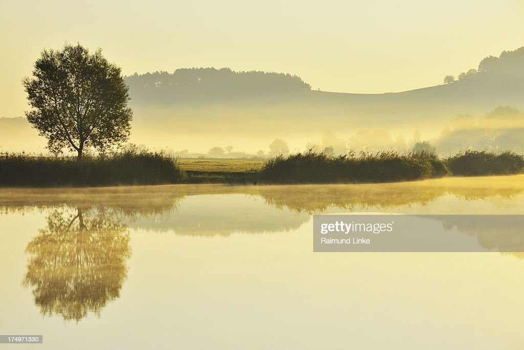 Landscape with Tree and Morning Mist