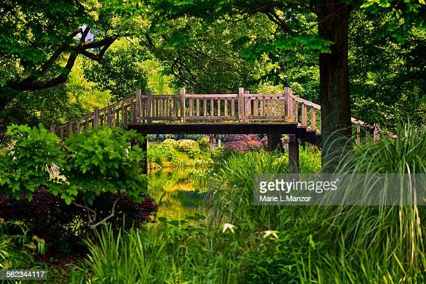 Landscape with wooden bridge