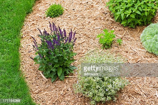 Landscaping With Wood Mulch : Landscaped perennial flower garden with wood chip mulch