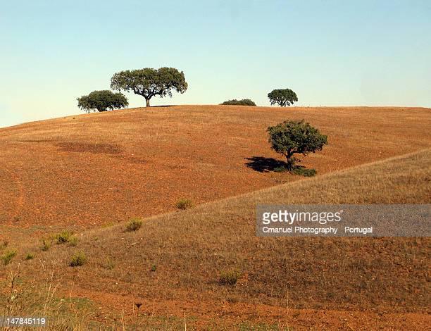 Landscapes of Alentejo / Paisagens do Alentejo